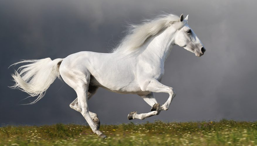35 Interesting And Bizarre Facts About Horses - Tons Of Facts - photo#47