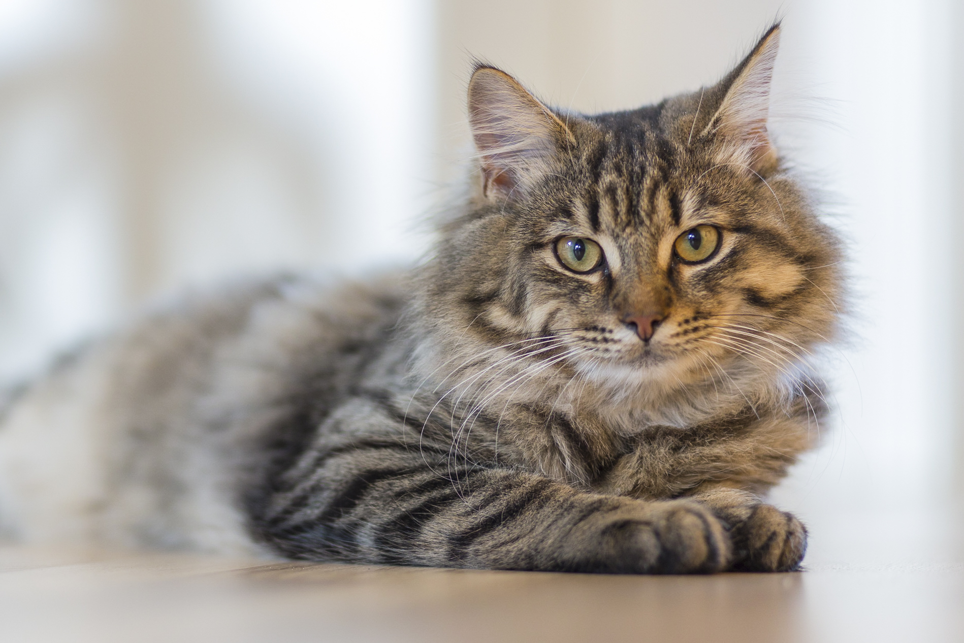 40 Interesting And Weird Facts About Cats - Tons Of Facts