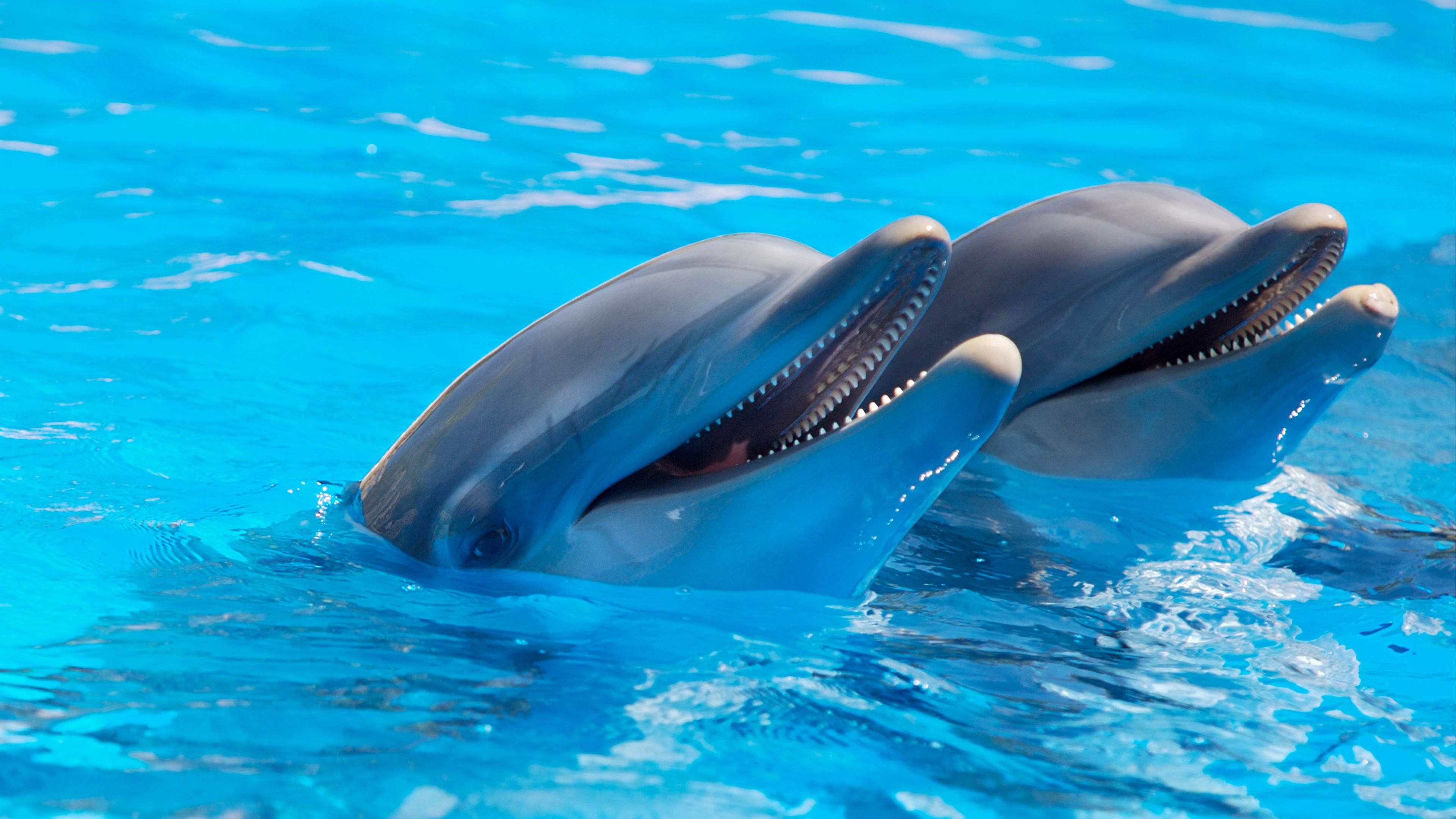 27 Interesting And Weird Facts About Dolphins
